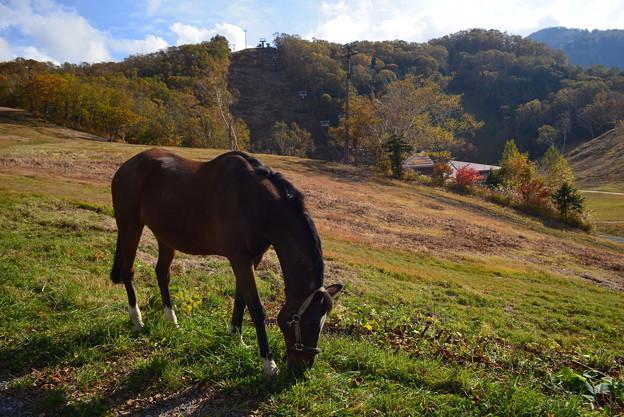 写真: 秋の高原にて