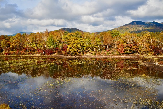 写真: 蓮池