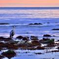写真: 早朝の雨晴海岸にて