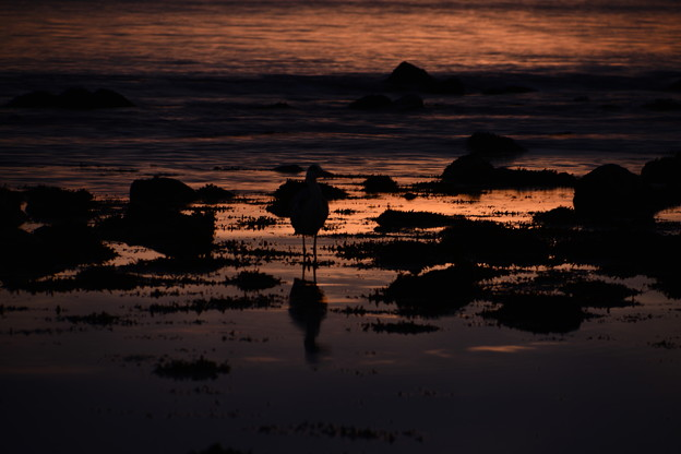 朝を待つ海鳥