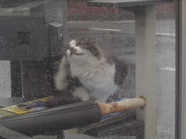 写真: 雨宿り