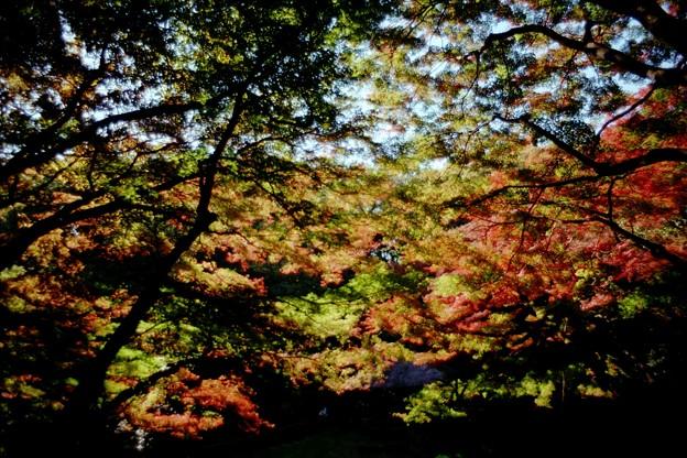印象派の秋