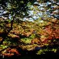 写真: 印象派の秋