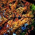 写真: 三渓園の橙