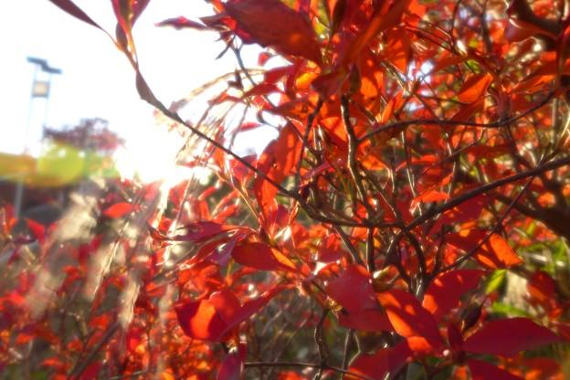 秋、もうひとつの赤