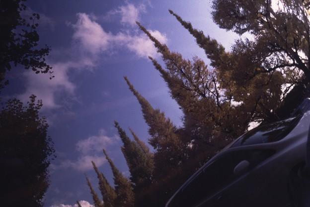 写真: ボンネットの秋