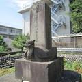 Photos: 亀趺型の墓石