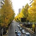 Photos: 銀杏並木が綺麗ですね