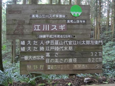 江川杉の看板