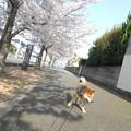 桜も綺麗だし・・・