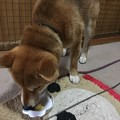 Photos: あっという間に・・・