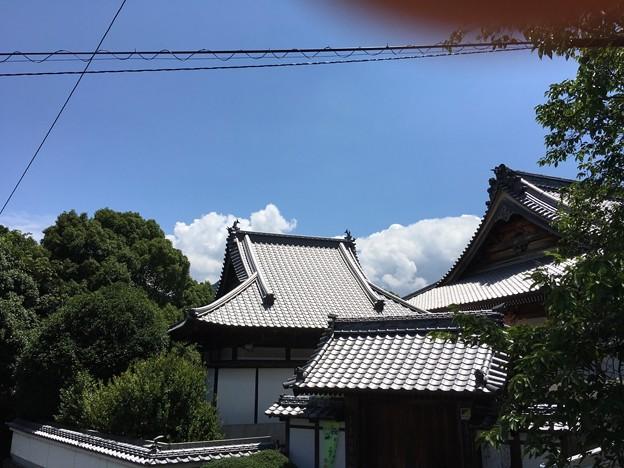 お寺の屋根の向こうにも