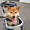Photos: お気に入り~!