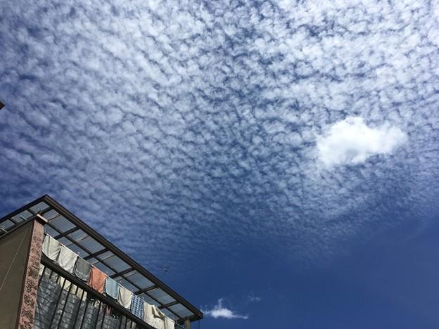 一面のうろこ雲に・・・
