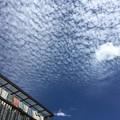 Photos: 一面のうろこ雲に・・・