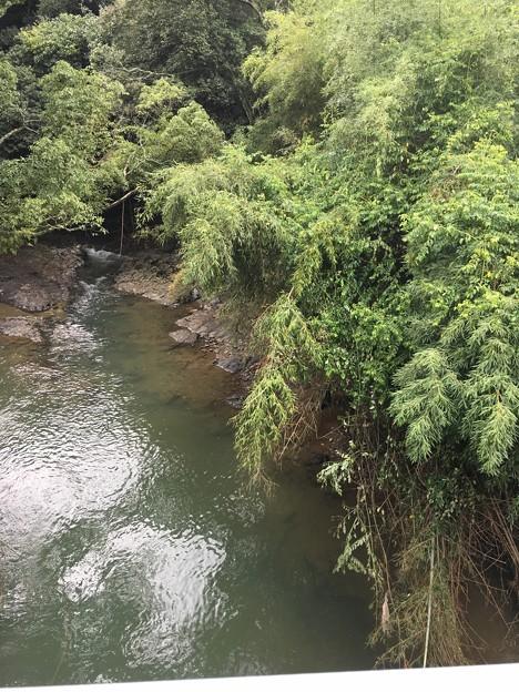この川も笹がなぎ倒されてました~!