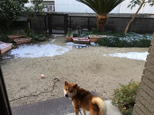 雪が(@_@)