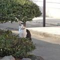 写真: 三木町の猫