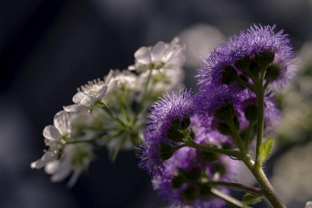 蒼い香り blue-notes 1