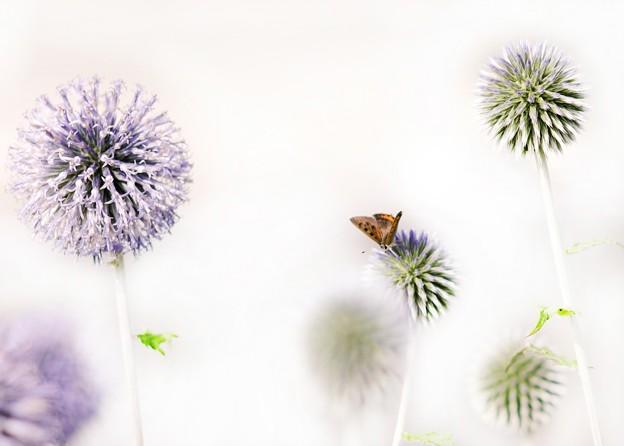 蒼い香り blue-notes 9