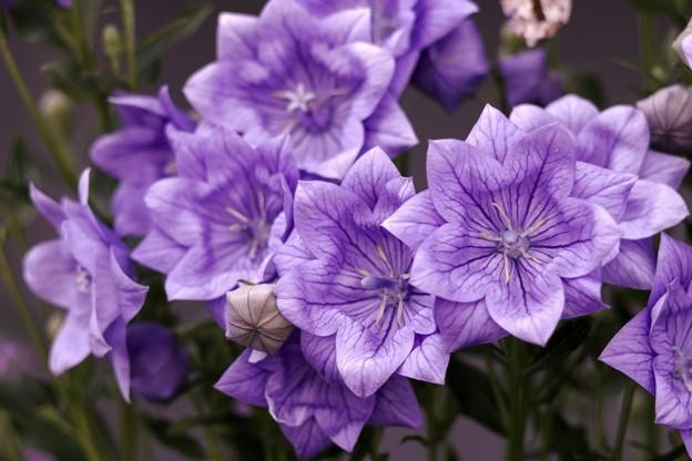 蒼い香り blue-notes 10