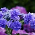 蒼い香り blue-notes 14