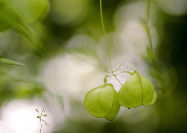 写真: 秋の緑を想う・・・a