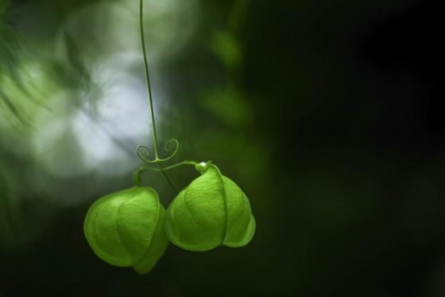 写真: 秋の緑を想う・・・b