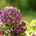 写真: 仲秋の庭/美色の痕跡
