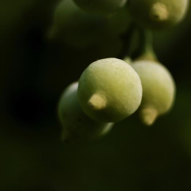 写真: 秋の緑を想う・・・d
