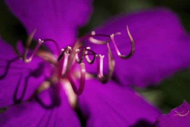 「紫紺の蜘蛛」