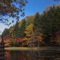 写真: 紅桜公園/錦秋 3/釣堀