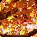 秋を撮る d