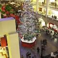 写真: big Christmas tree 1