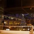 写真: big Christmas tree 2 / In the window / inside & outside