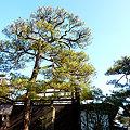 高野長英旧家。