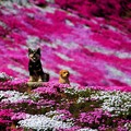写真: 三島さんちのイヌ
