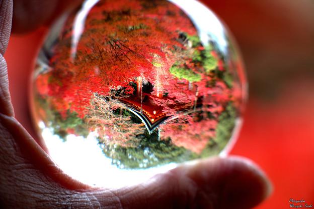 Photos: 紅葉と高台弁才天を閉じ込めて