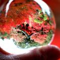 写真: 紅葉と高台弁才天を閉じ込めて
