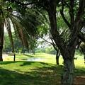 ロイヤルゴルフクラブ-2