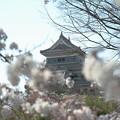 桜咲く烏城_3
