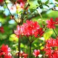 写真: 美笹湖の赤と緑とそよかぜと・・・_002