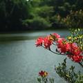 美笹湖の赤と緑とそよかぜと・・・_005