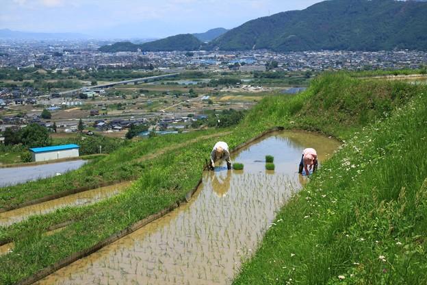 棚田の田植え (3)