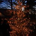 Photos: 灯の森