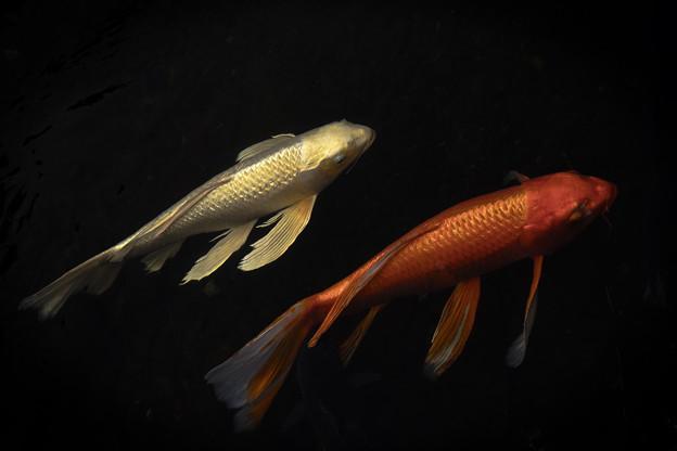 写真: 双魚