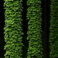 写真: 緑樹