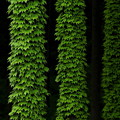 Photos: 緑樹