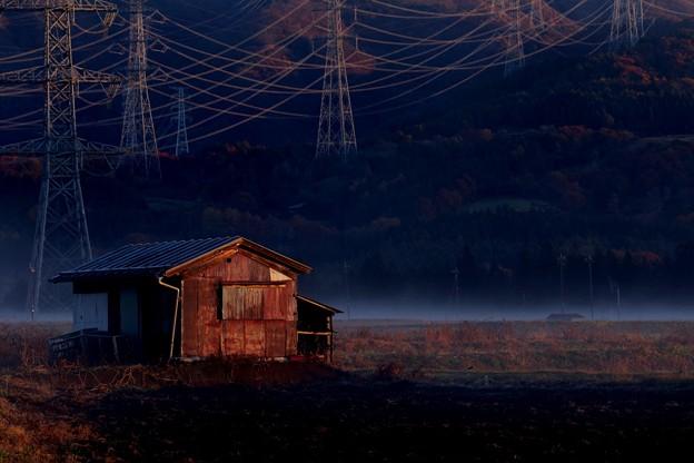 写真: 朝の小屋