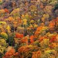 写真: 秋景6